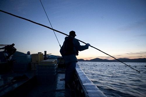 かつおの一本釣り漁法とはどんなもの?